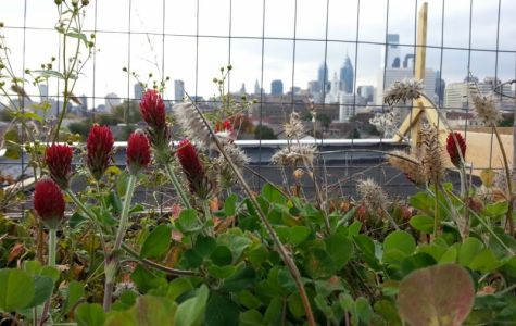 Rooftop Gardens in Philadelphia to Feed the People